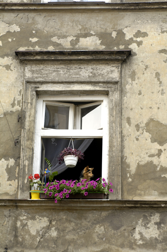 Krakow dog in window