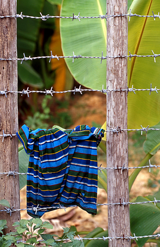 Shirt Drying on Fence