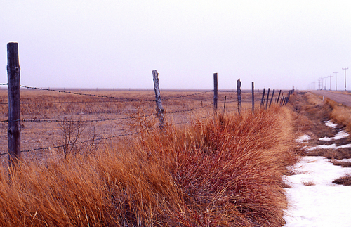 Kansas Fenceline