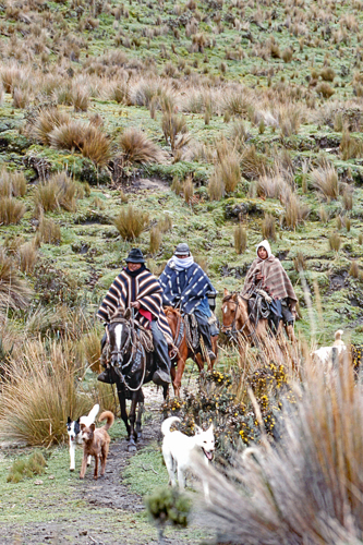 Ecuadorian Cowboys on the hunt