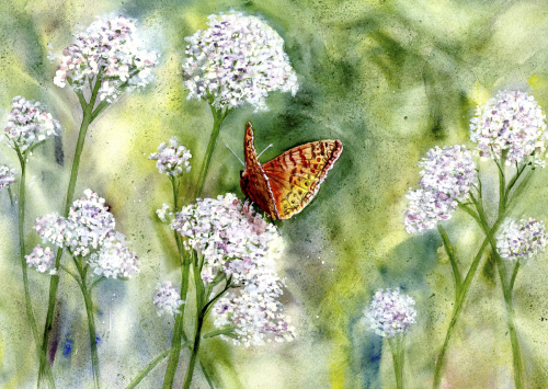 Butterfly in Flowers