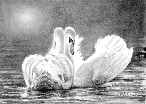 Swans Dancing in the Moonlight