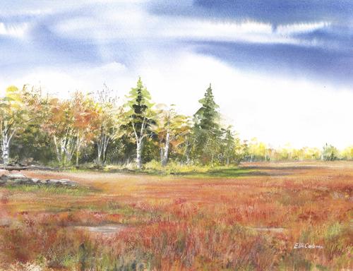 Maine Blueberry Field In Bloom