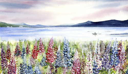 Maine Lupines and Lake