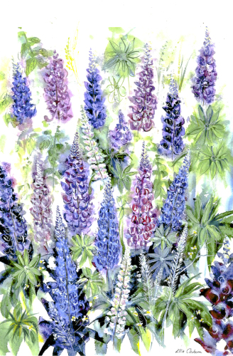 Lupines Arrays