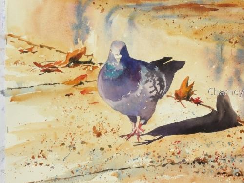Pigeon in the Sun