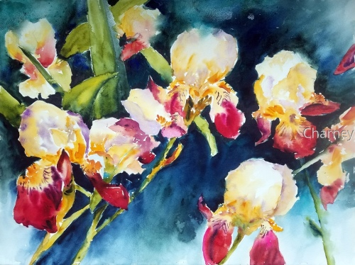 Four Red Iris