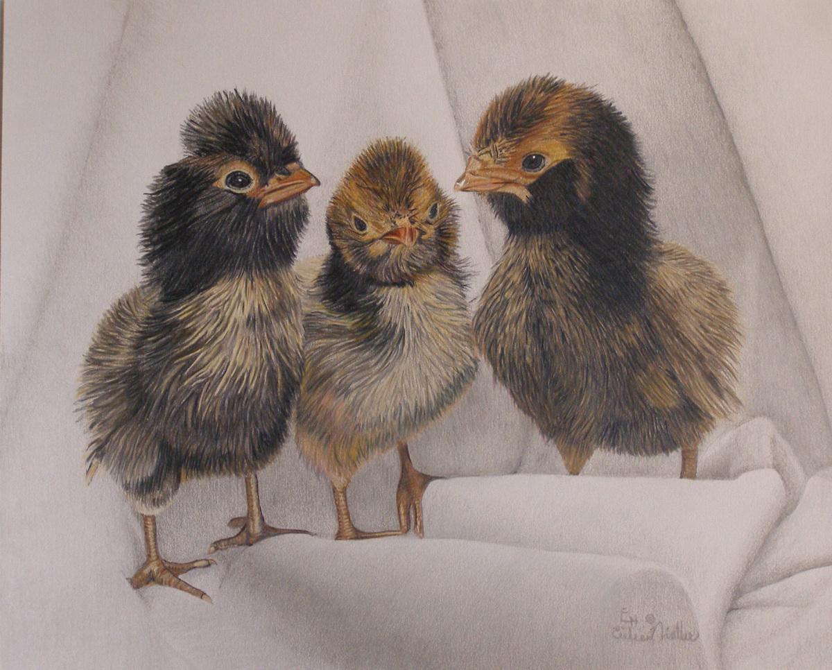 Three Cute Chicks (large view)