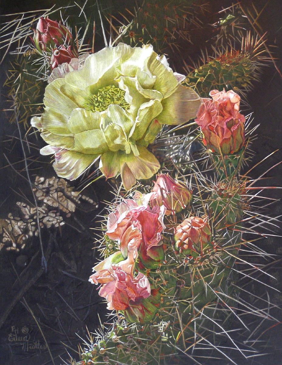 Drawing Quot Cactus Flower Quot Original Art By Eileen Nistler