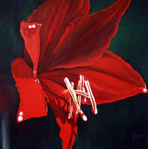 Amaryllis-Floating Stamens