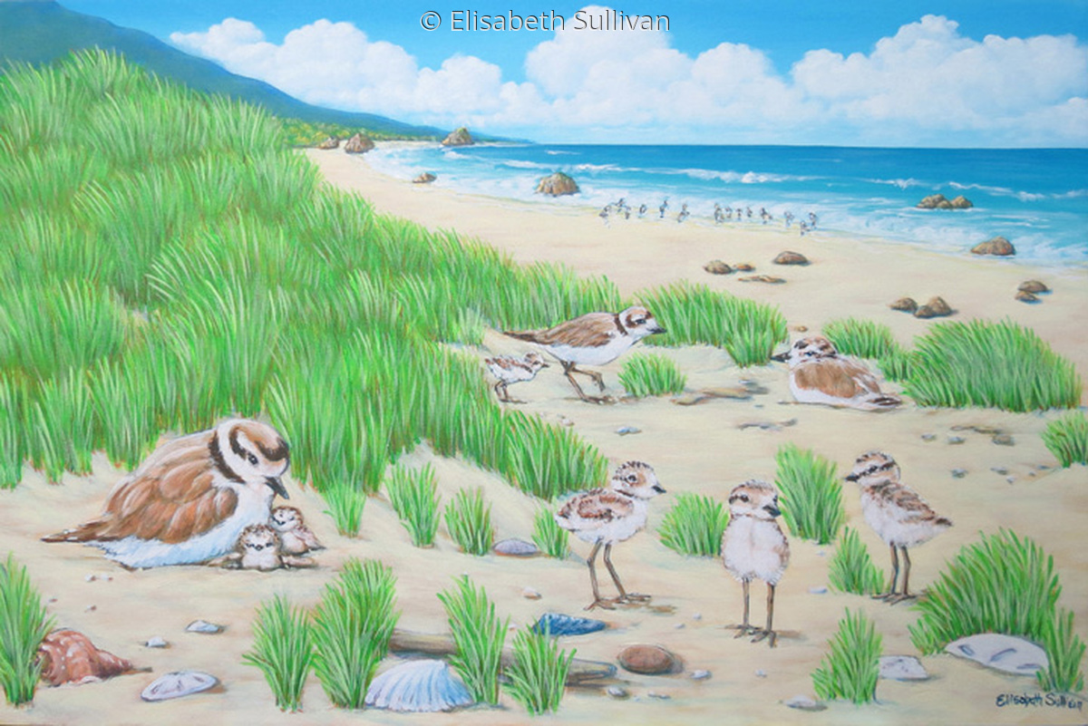 Snowy Plovers (large view)