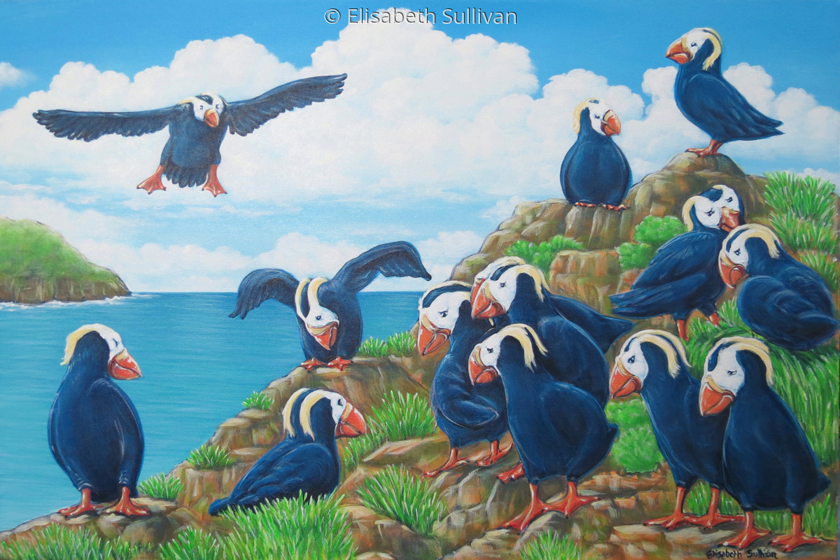 Puffins (large view)