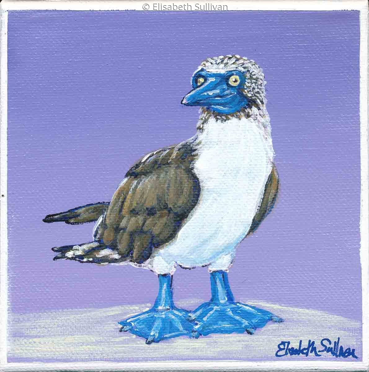 Blue Footed Booby (large view)