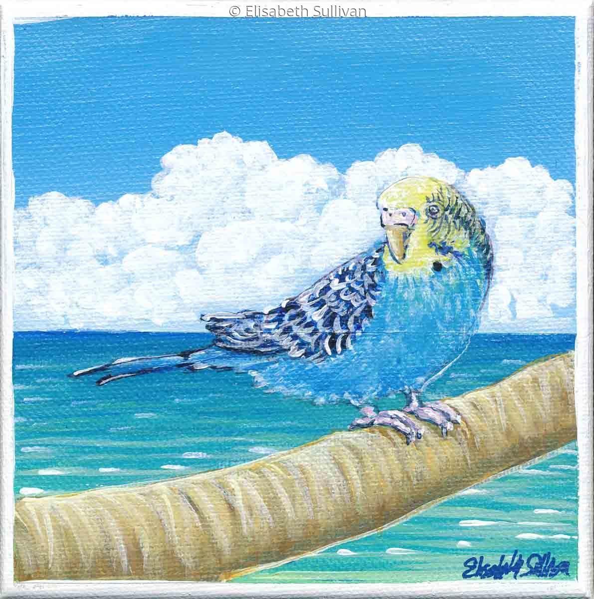 Parakeet (large view)