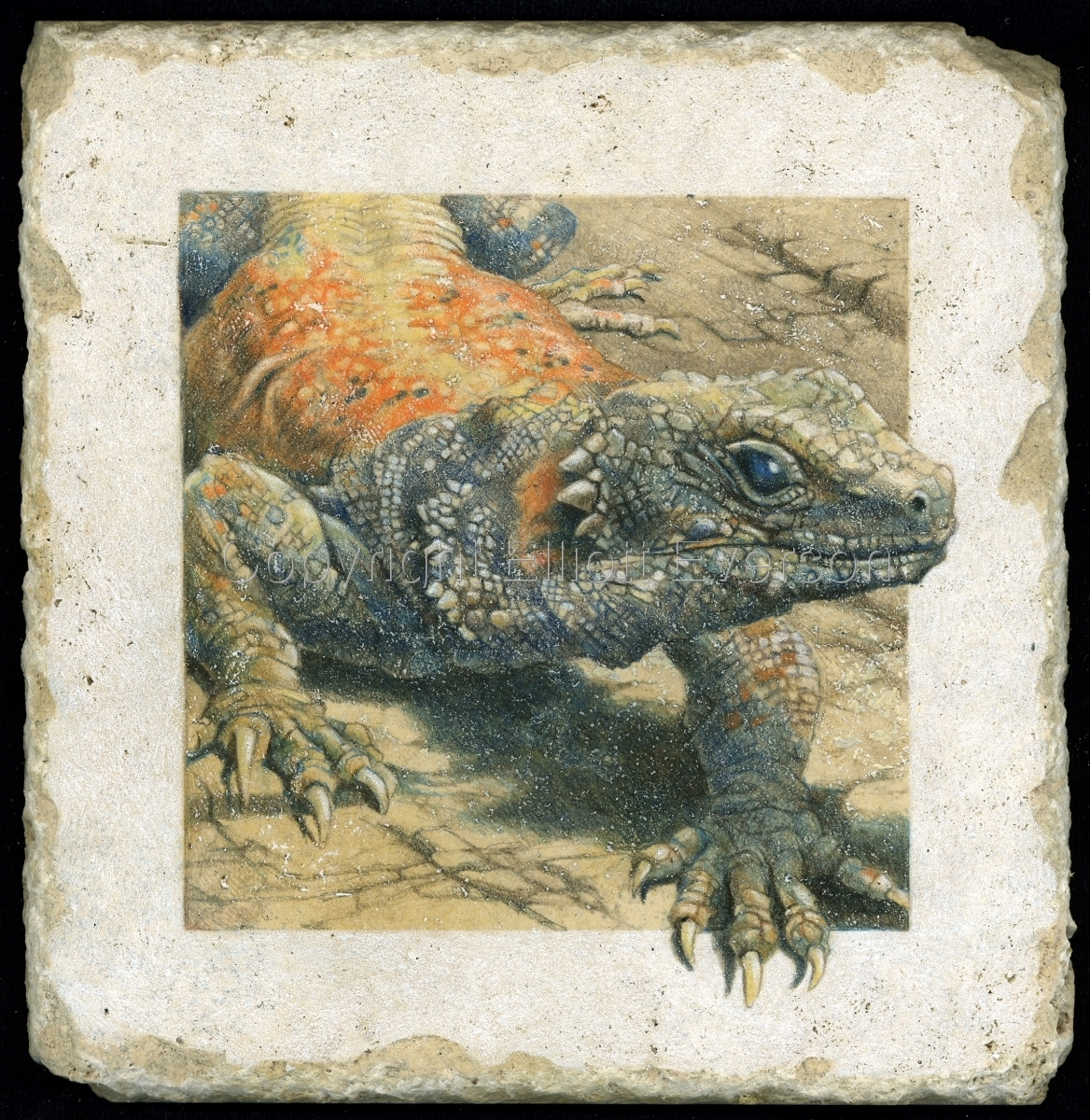 Colored Pencil drawing on stone of Chuckwalla Lizard (large view)