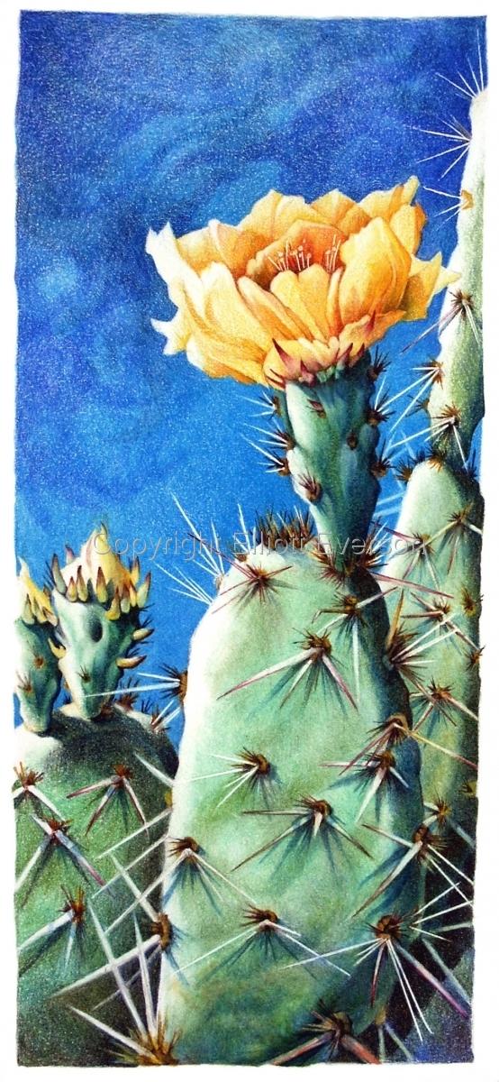 Arid Beauty by Elliott Everson (large view)