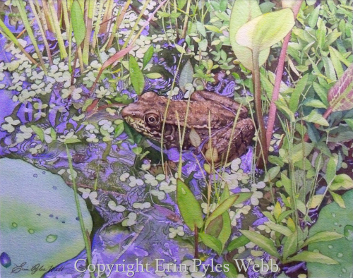 Young Green Frog by Erin Pyles Webb - Portraits & Fine Art