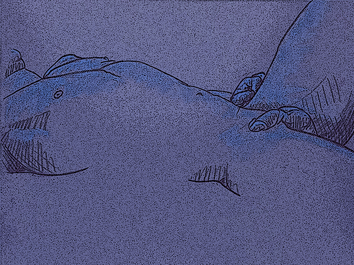 Reclining - Variation (large view)