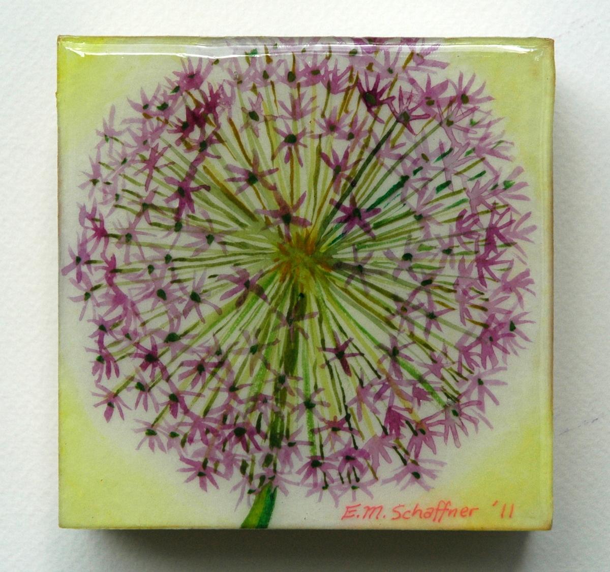 Burst of Allium (large view)