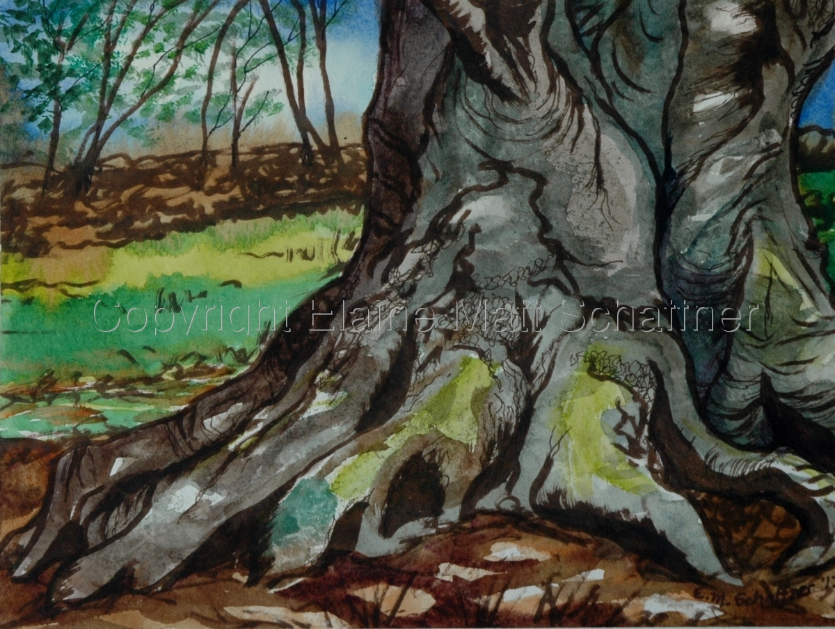 """Dragon Claw Beech"" (large view)"
