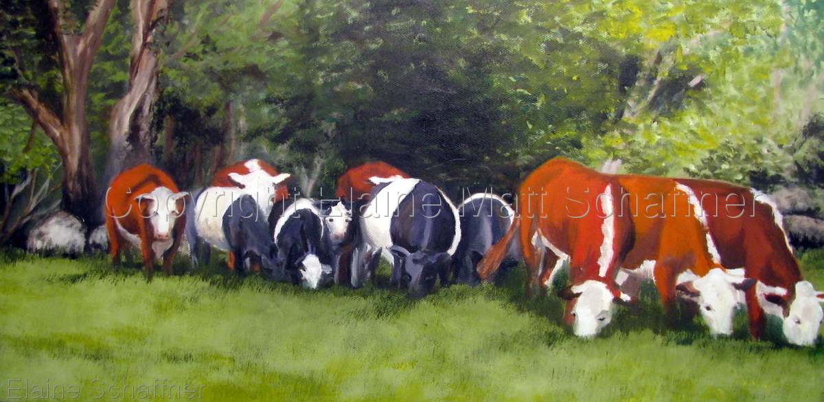 Grazing Cows, Maine (large view)