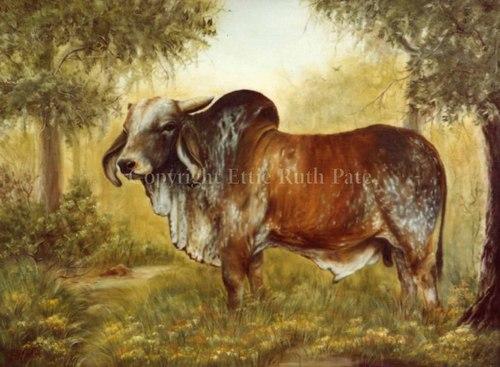 """""""The Bull"""""""