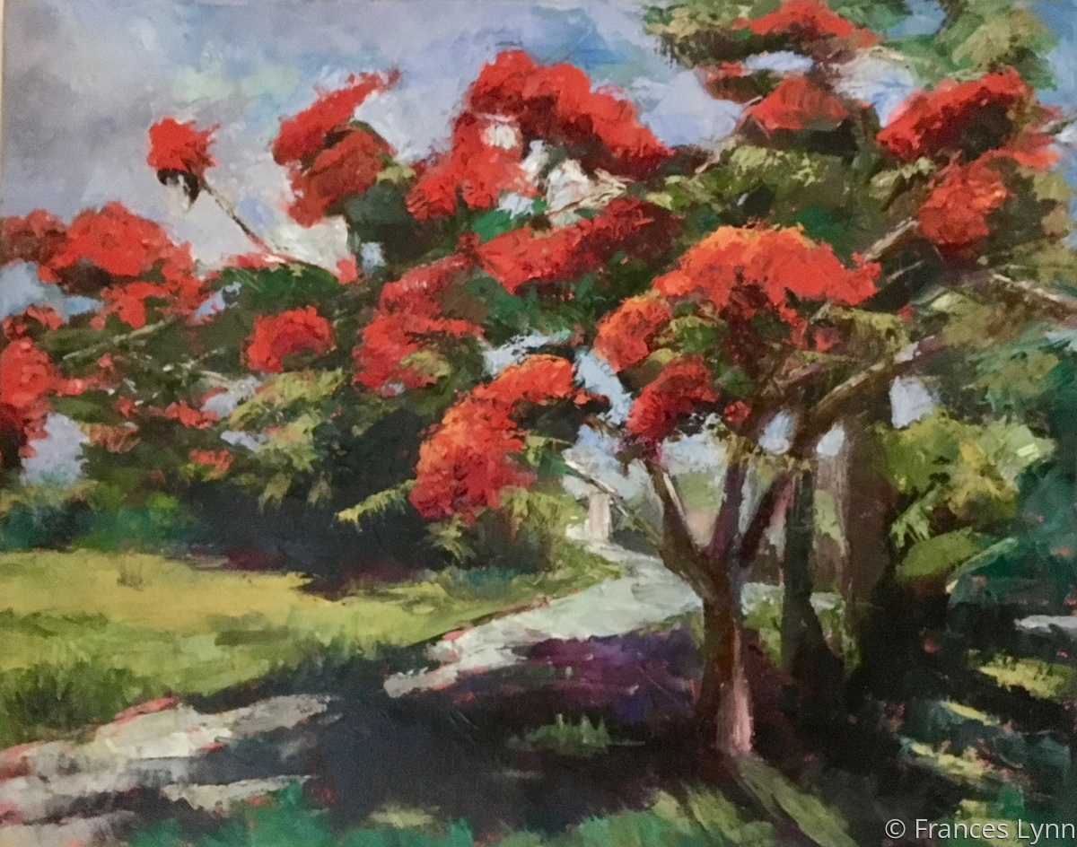 Royal Poinciana (large view)