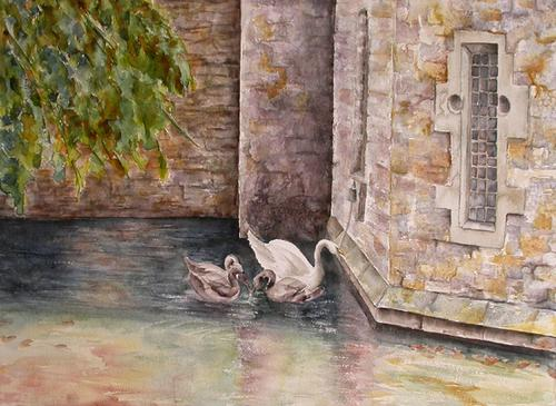 Swans, Wells Cathedral