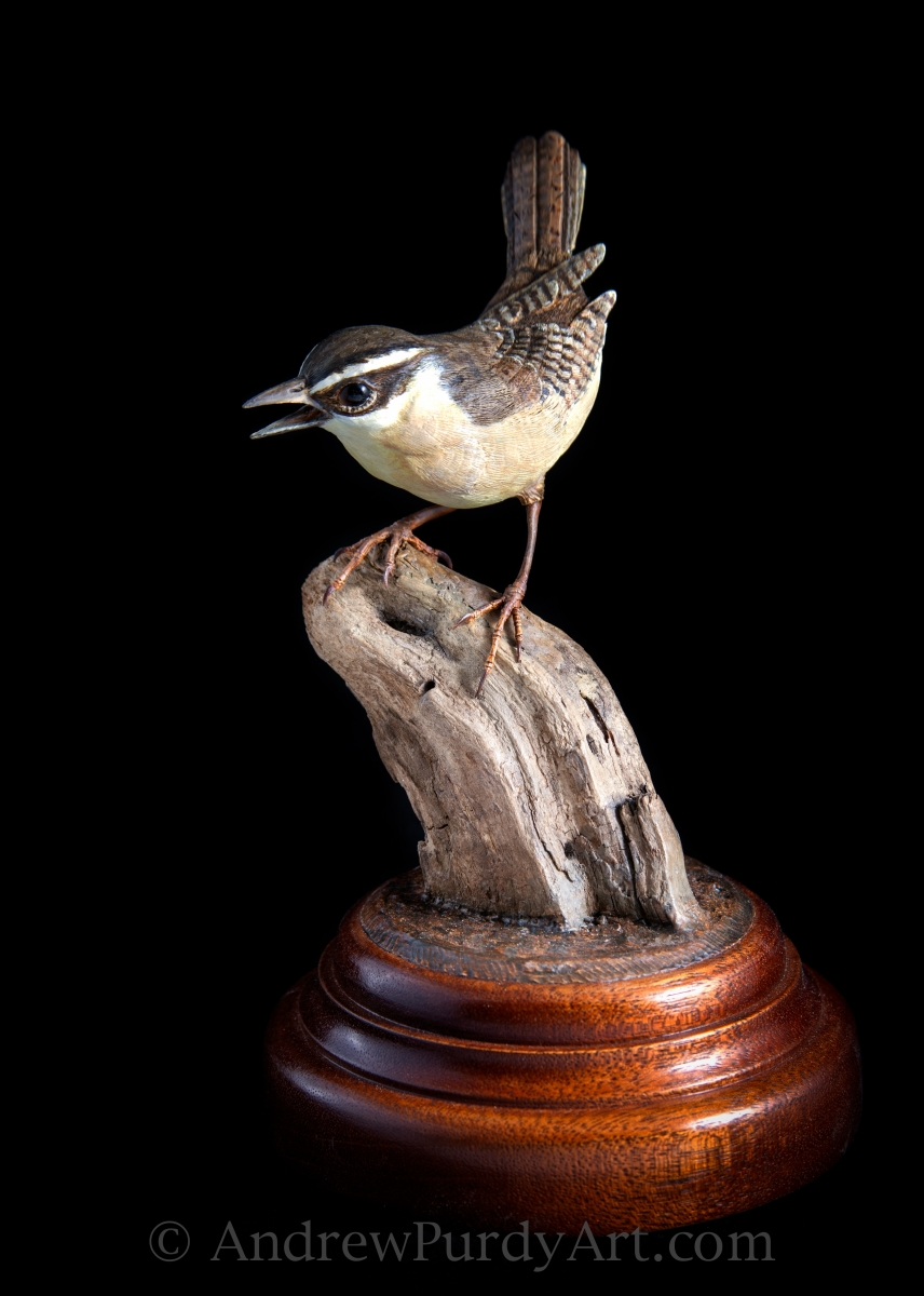 Carolina Wren (large view)