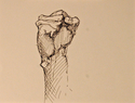 Pen & Ink Sketch of Fist (thumbnail)