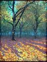 Fall Scene (thumbnail)
