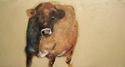 Painting--Acrylic-AnimalsGlint