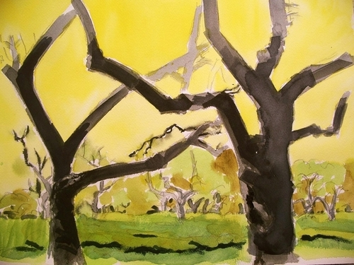 yellow orchard