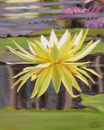 Water Lilies #22 by Frank DePietro