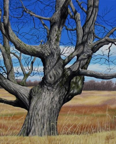 Sugar Maple Tree Print by Frank DePietro