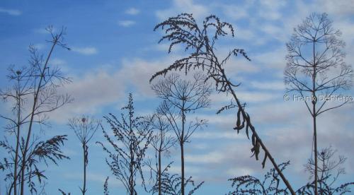 Winter Meadow 2