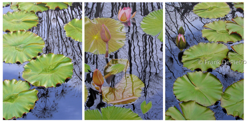 Water Lilies Triptych