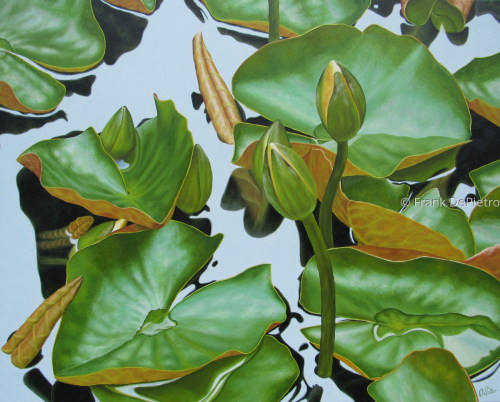 Water Lilies #46