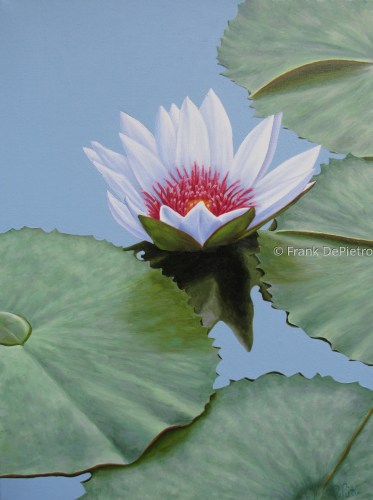 Water Lilies #49
