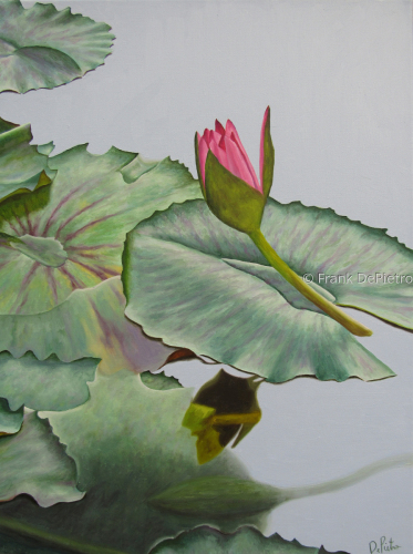Water Lily #50