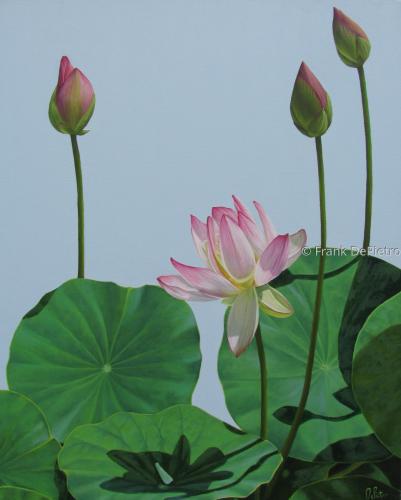 Lotus Number Seventeen