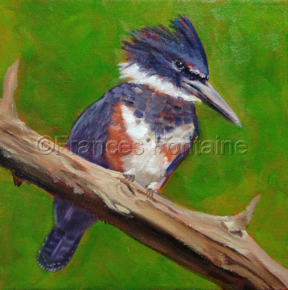 """""""Belted Kingfisher"""" (large view)"""