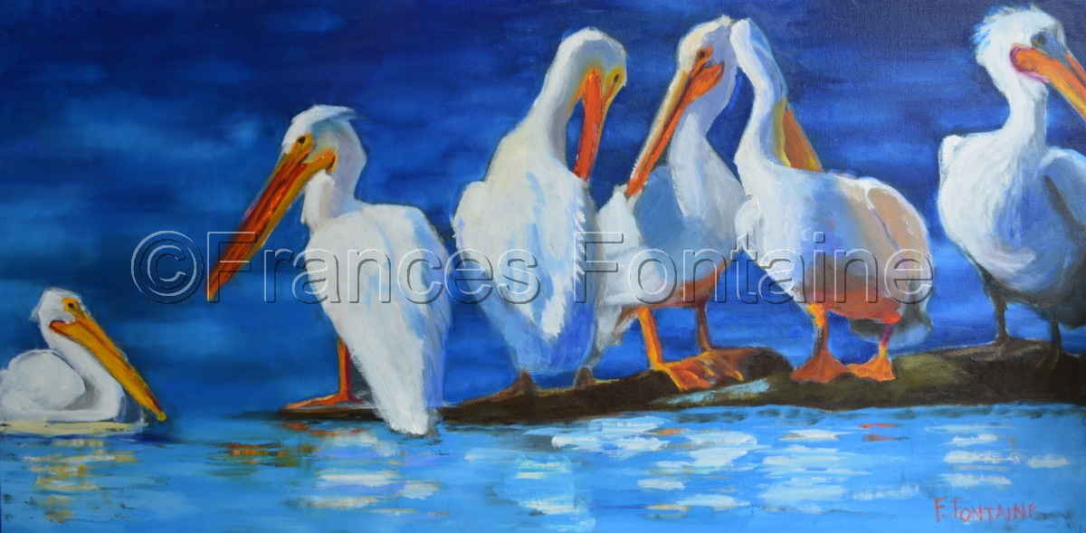 White Pelicans (large view)
