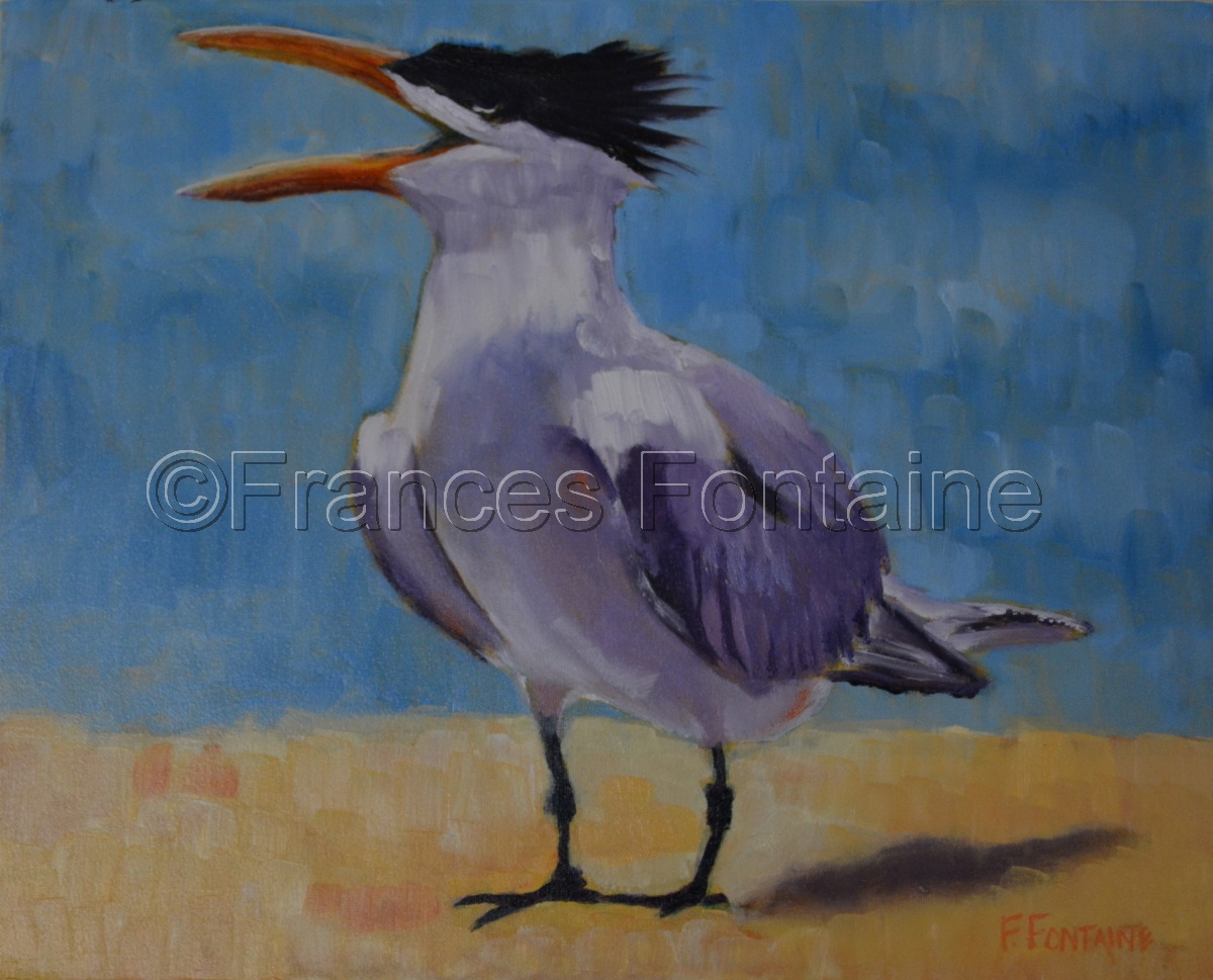 Greater Crested Tern (large view)