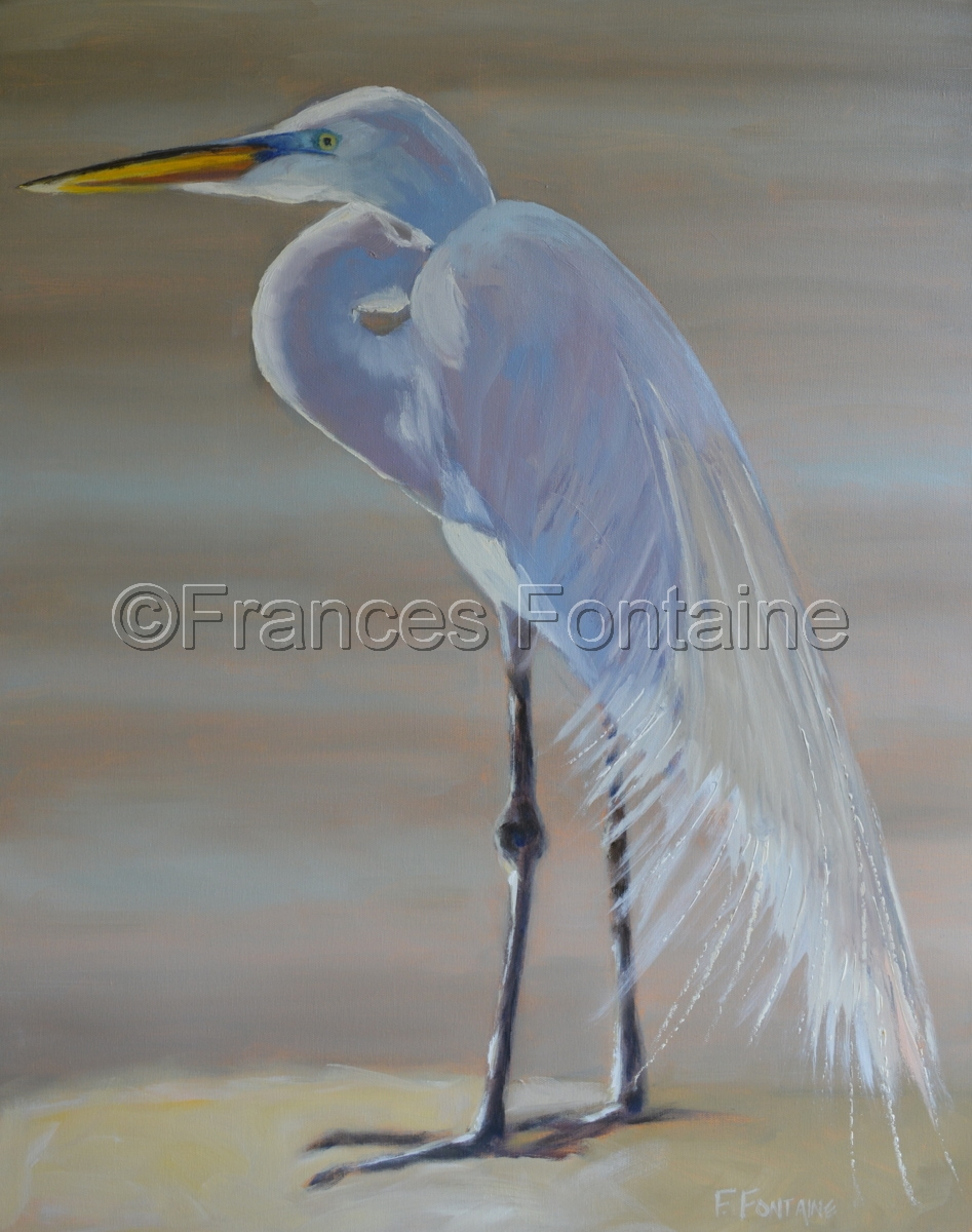 Great White Egret (large view)