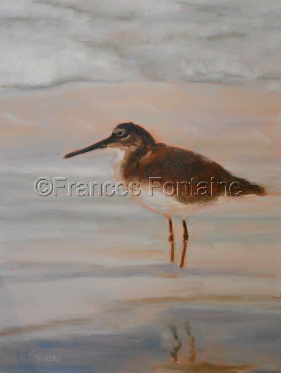 Single Willet (large view)