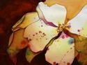 Dogwood Flower (thumbnail)