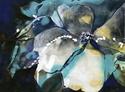 Dark Flower (thumbnail)
