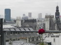 Red Rose in Paris (thumbnail)