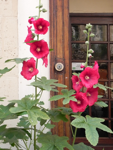 Red Flowers at the Door